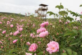 Türkiye'nin çiçek bahçesi Isparta'da kırsal turizm refahı