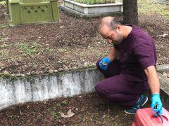 Mezarlıkta ölü bulunan kaplumbağalara analiz yapılamadı