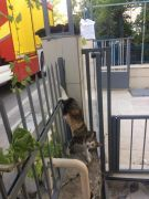 Isparta'da demir korkuluklara saplanan kediyi itfaiye kurtardı