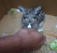 Isparta DKMP'nin tedavi ettiği 5 yaban hayvanı doğaya salındı
