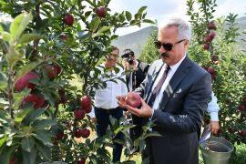 Vali, tekneyle göle açılarak, bahçede elma topladı