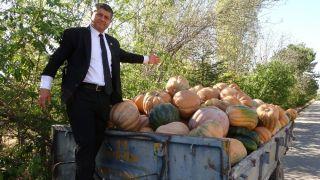 Isparta'da kabak hasadı başladı