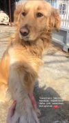 """Güleda Cankel: """"İnsanları tanıdıkça köpekleri daha çok seviyorum"""""""