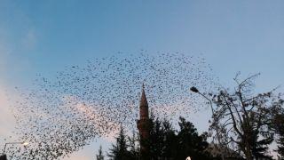 Isparta semalarında kuşların eşsiz dansı