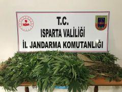 Isparta'da yasa dışı kenevir yetiştiren bir kişi gözaltına alındı