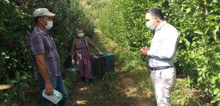 Kaymakam Çelik elma işçilerini denetledi