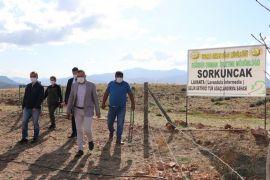 Sorkuncak Köyü lavantalarla cazibe merkezi haline getirilecek