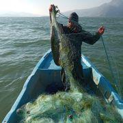 Eğirdir Gölü'nde balıkçı ağına yayın balığı takıldı