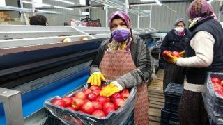 Isparta'da elma ihracatı 4 kat arttı