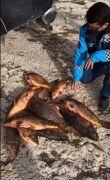 Eğirdir Gölü'nde av yasağına rağmen katliam
