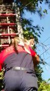 Isparta'da ağaçta mahsur kalan ve asansör boşluğuna düşen kedileri itfaiye kurtardı