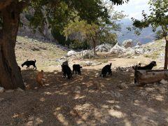 AFAD ekipleri dağda mahsur kalan 4 keçiyi kurtardı