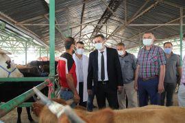 Isparta'da hayvan pazarlarında denetimler arttırıldı